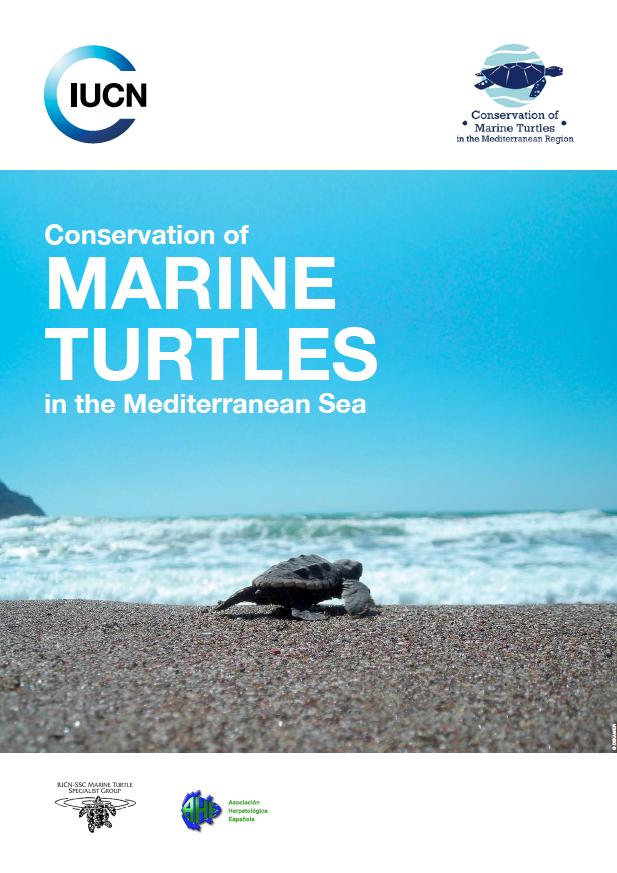 Tortues en Méditerranée