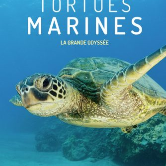 Programme Tortues marines