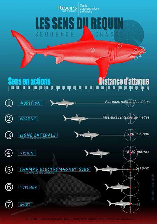 Requins Infors