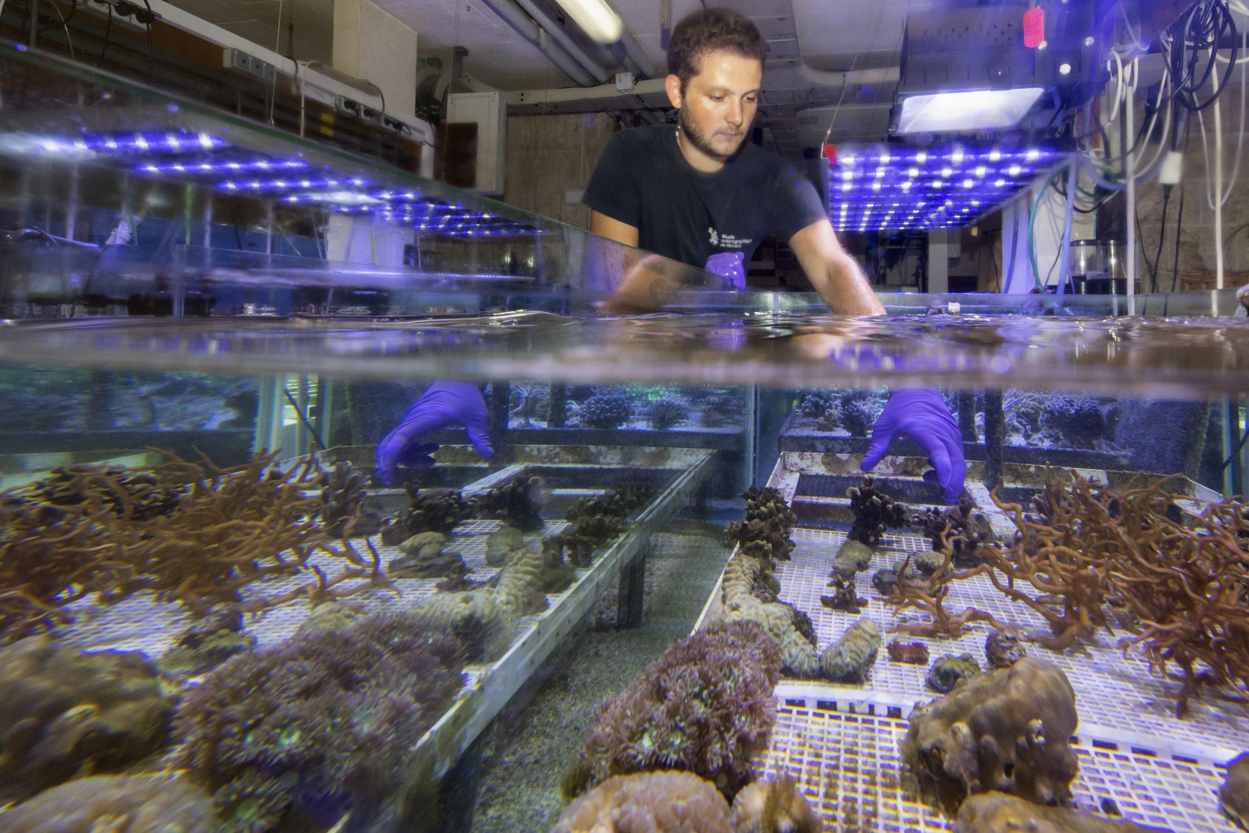 Aquariologiste atelier coraux ©M.Dagnino