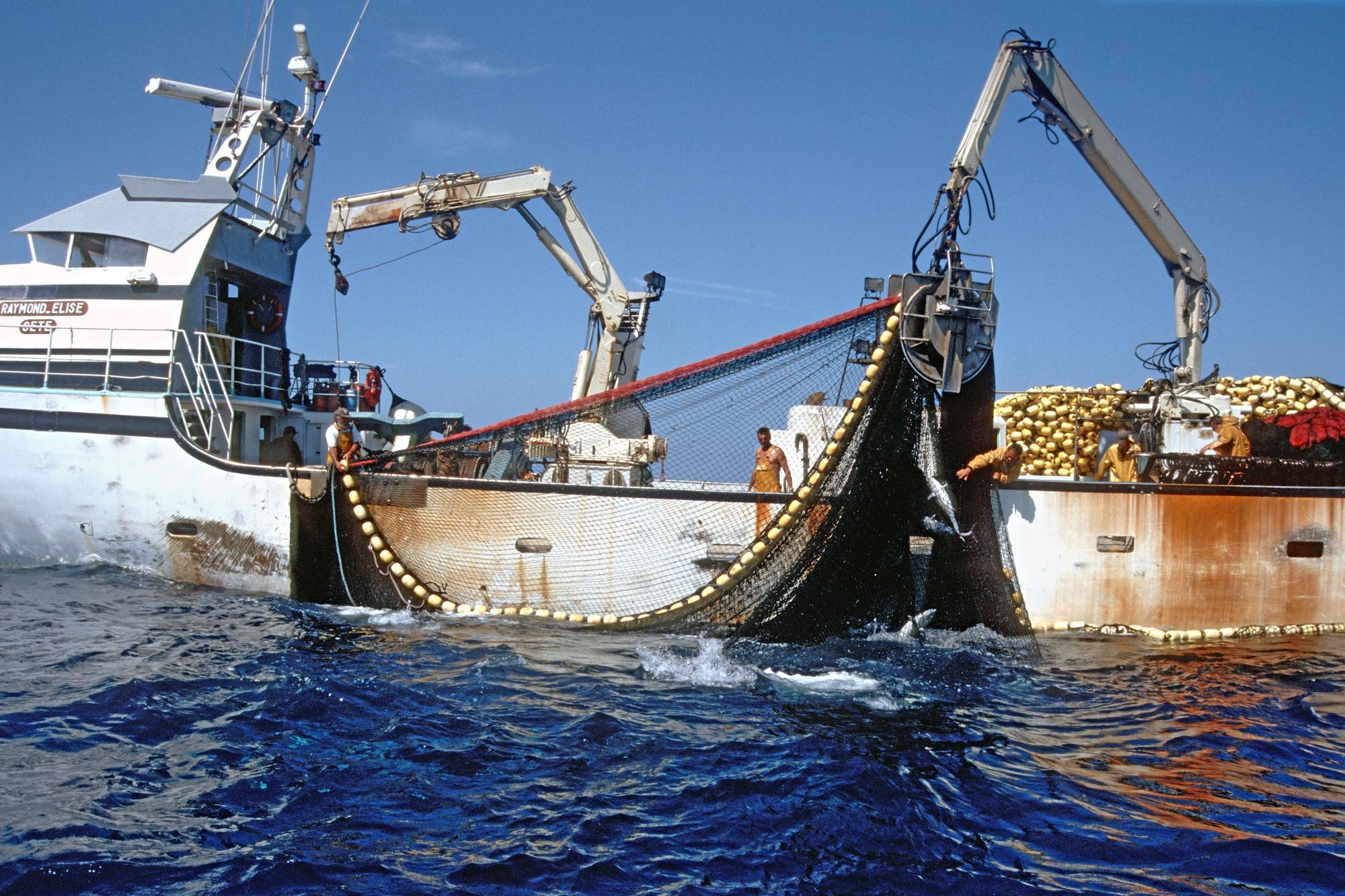 7. La surpêche menace le thon rouge