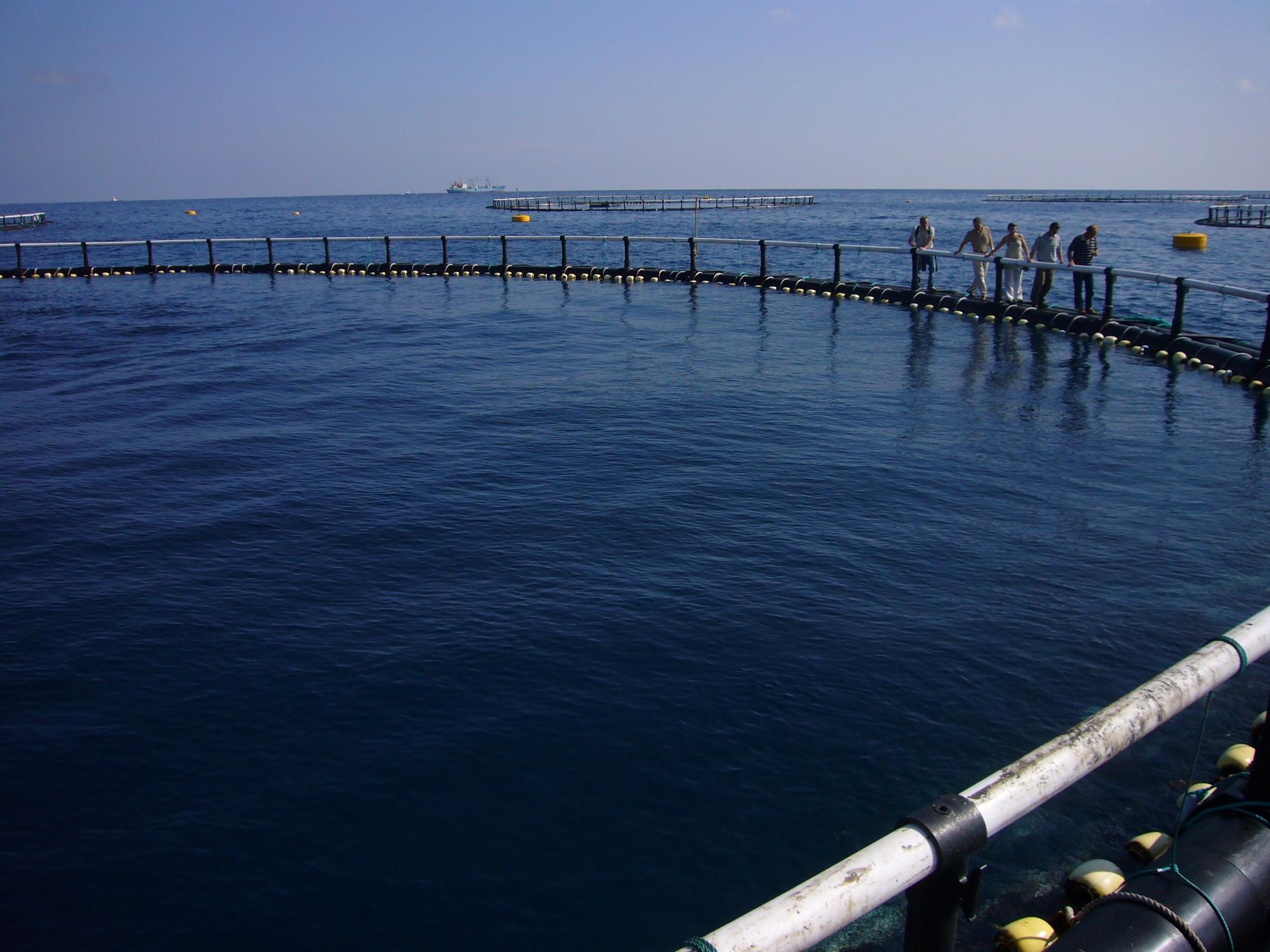 10. Où en est l'aquaculture du thon rouge ?
