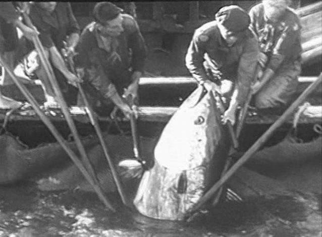 Stromboli Rossellini 1949