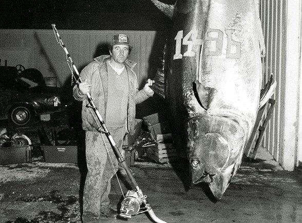 3. Quels sont la taille et le poids d'un thon rouge ?