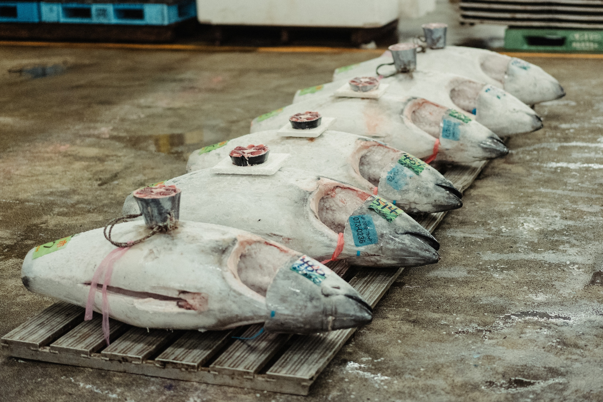 2. Pourquoi le thon rouge est-il si recherché ?