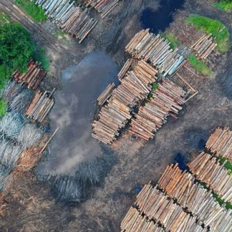 Deforestation - Source : Pok rie @ Pexel