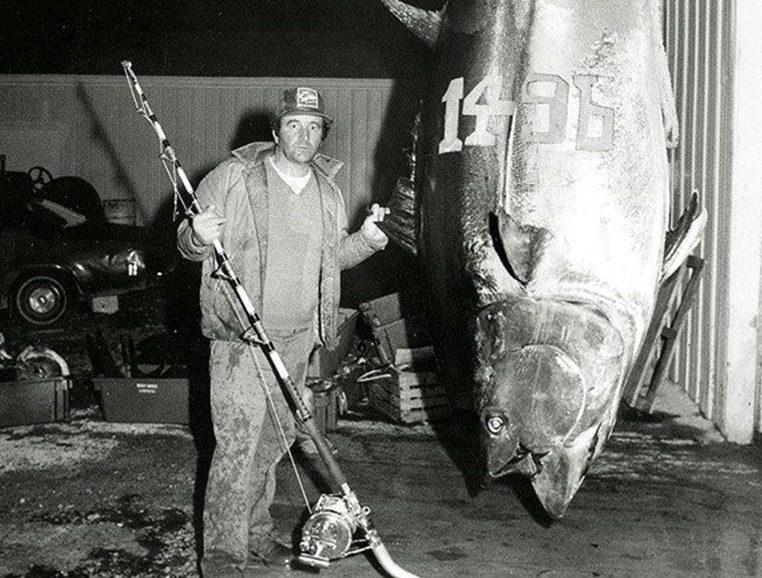 Quelle est la taille du thon rouge ?