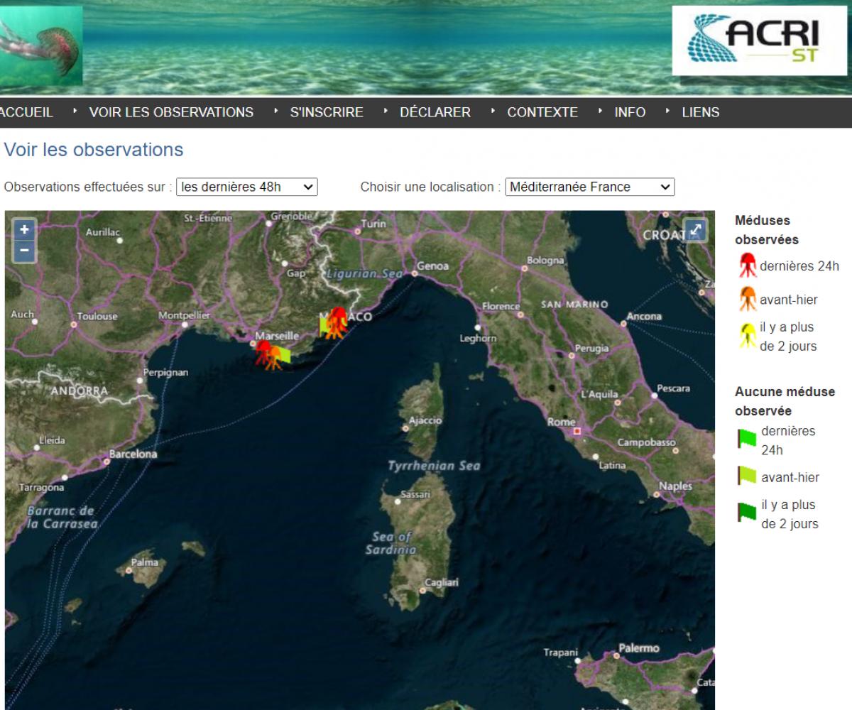 Cartographie des méduses en région PACA