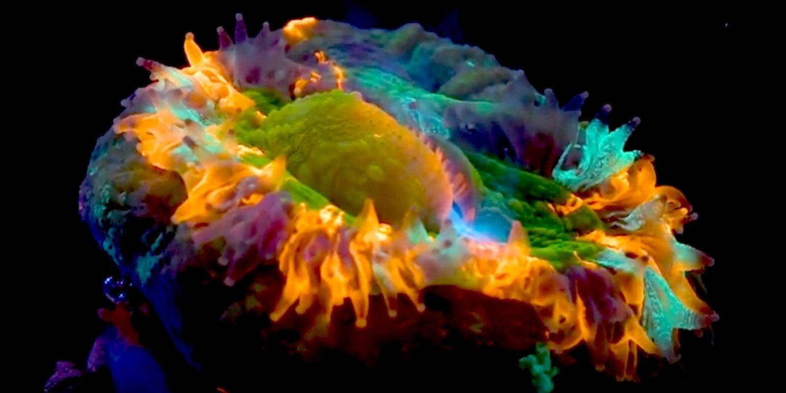 corail-fluo.jpg