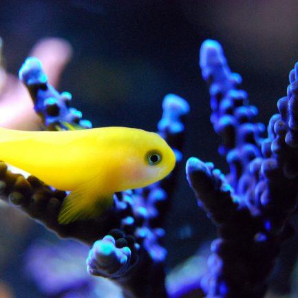 fish-2706704_1920